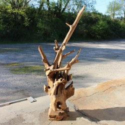 Sculpture d''une racine en Teck H180 (RAC008)
