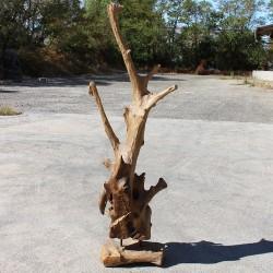 Sculpture d''une racine en Teck H192 (RAC015)